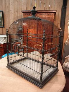 Ohhhhhhh, I want it. Big Bird Cage, Antique Bird Cages, Pet Cage, Animal House, Bird Watching, Beautiful Birds, Household Items, Bird Houses, Diy Accessories
