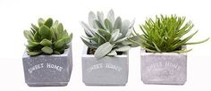 Sweet home stone effect potted succulents Gifts For Him, Great Gifts, Succulent Gifts, Small Succulents, Little Plants, Planter Pots, Sweet Home, Stone, Room
