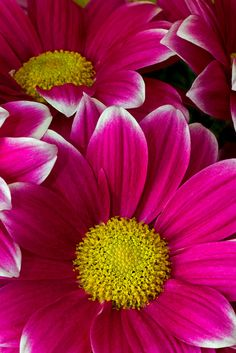 ~~bold pink by Rowdy Rebel1~~