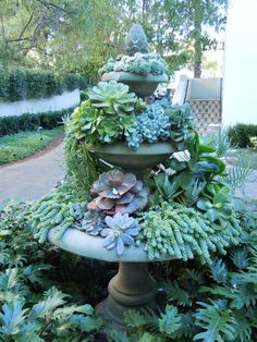 Bird bath planted with succlents.....I am SOOOO doing this in my fountain next year....I have been threatening to for years.....im doing it!
