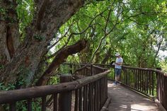 """Heather Mason on Instagram: """"I just published a blog post about the Wonderboom Nature Reserve - an underrated city park in Pretoria that I recently visited for the…"""" Heather Mason, Pretoria, Nature Reserve, Park City, Outdoor Decor, Plants, Blog, Instagram, Blogging"""