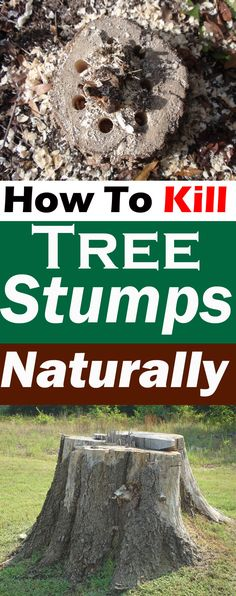 Killing tree stumps naturally is safe and doesn't require chemicals. In this article you'll learn how to kill tree stumps naturally.
