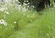 Image result for path through wild meadow