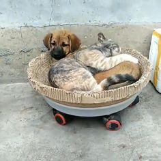 Funny Animal Photos, Cute Animal Videos, Cute Animal Pictures, Cute Funny Animals, Cute Baby Animals, Animals And Pets, Cute Cats, Video Chat, Cute Creatures
