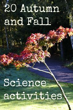 20 Fall and Autumn science ideas, includes leaf rubbing, play dough, toffee apples, floating art and much more