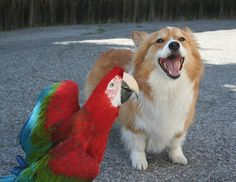 that was one good joke rani macaw ------ (1 of 6) by sansanparrots, via Flickr