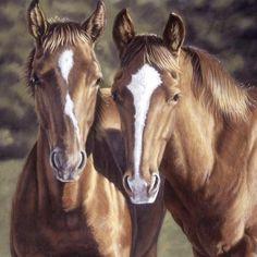Horsin' Around Tango & Cash Horse Panel by Penny Rose - Riley Blake Fabrics Most Beautiful Horses, Pretty Horses, Horse Love, Animals Beautiful, Horse Head, Horse Art, Tango & Cash, Animals And Pets, Cute Animals