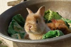 Bunny in the veggie bowl!