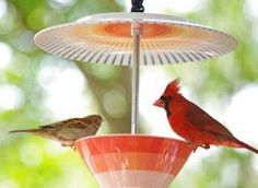 Attract Birds To Your Outdoor Space With This Quirky Bird Feeder