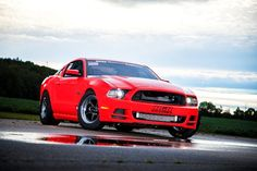 Mike Ciborowski's 2014 Ford Mustang GT (photo credit: Kevin DiOssi – Mustang Sn95 Mustang, 2014 Ford Mustang, Ford Mustangs, Driving Test, Photo Credit, Race Cars, Racing, Ram Cars, Ford Mustang