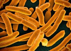 Indicator of chronic fatigue syndrome found in gut bacteria.  Researchers have evidence that an overactive immune system plays a role in chronic fatigue. Symptoms include fatigue even after sleep, muscle and joint pain, migraines and gastrointestinal distress.