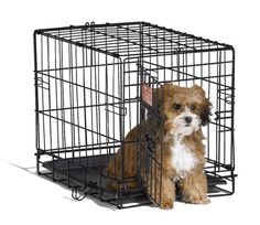 Midwest 1518 iCrate Single-Door Pet Crate 18-By-12-By-14-Inch by Midwest Homes for Pets, http://www.amazon.com/dp/B000OXAER2/ref=cm_sw_r_pi_dp_9nH4rb0GQ2NCD