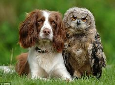 Springers are hunting dogs...we can all learn a lesson from unlikely friendships!