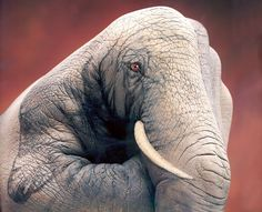 Elephant Hand Painting by Guido Daniele. Here is his website http://www.guidodaniele.com/  #Elephant #Hand #Guido_Daniele