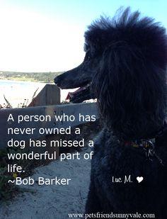 Wonderful poodle.