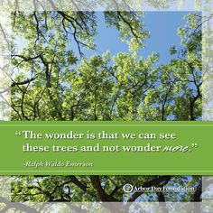 153 Best Tree Nature Quotes Images Thoughts Messages Inspiring