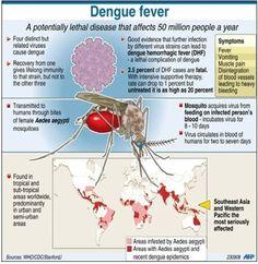 25 best Information on Dengue fever images on Pinterest | Dengue ...