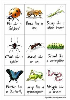 Insect / Bugs Action cards – Jasmine Blooms Gross motor or brain break activit. - Insect / Bugs Action cards – Jasmine Blooms Gross motor or brain break activities Insect / Bugs A - Insect Activities, Gross Motor Activities, Movement Activities, Gross Motor Skills, Learning Activities, Preschool Activities, Physical Activities, Insect Games, Bug Games