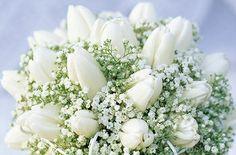 Tulip (Tulipa sp) and Babys Breath (Gypsophila sp) bouquet (4201-22122 / 00280854 © Minden Pictures)