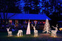 Outdoor Christmas Lights | Outdoor Christmas Lights | Flickr - Photo Sharing!