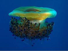 50 Stunning Underwater Photos | Smashing Magazine