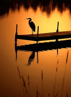 Heron on Lost Lake by Lynn Haack on Capture Wisconsin // Lone Heron at dawn on Lost Lake in St. Germaine, Wisconsin