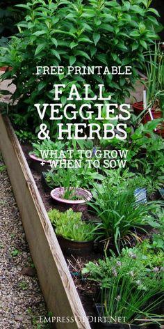 This handy list shares which vegetables and herbs you can grow in fall in a cold… Many veggies and herbs benefit from cooler fall growing conditions to produce the most delicious flavors! Grab this list and get your autumn veg garden started. Indoor Vegetable Gardening, Veg Garden, Organic Gardening Tips, Edible Garden, Container Gardening, Garden Tips, Herb Gardening, Flower Gardening, Gardening Blogs