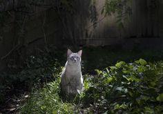 Monkey's Garden | Flickr - Photo Sharing!
