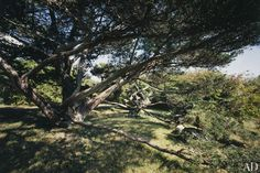 Homer enjoyed gardening and, appreciating their gnarled forms, planted juniper trees around his home.