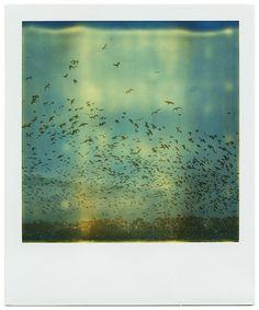 swarm behaviour.