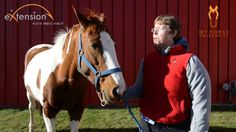 Horse Play and Behavior - Webinar Preview from eXtension.org/Horses. To view the full webinar, visit: http://www.myhorseuniversity.com/resources/webcasts/horseplay  #horses #behavior #horseplay
