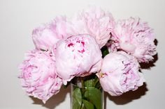 Peonies #1 photographed by Terry Richardson