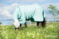Horseware Collection S/S16: Rambo Sweet Itch Hoody. Visit www.horseware.com to find your nearest stockist.