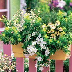 Blumenkasten im Romantik-Look