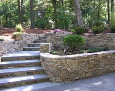 tiered garden with wide bluestone steps leading to the front entrance and through a shaded woodland garden