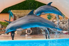 A victory for dolphins and animal lovers everywhere: Switzerland has banned dolphins in captivity!