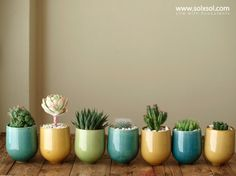 Perfect indoor plants, minimal care required