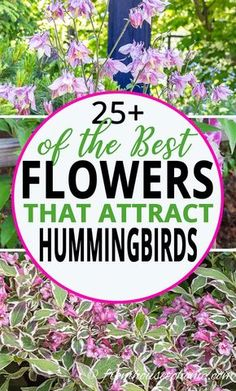 I love these hummingbird plants! So many flowers to choose from that will bloom in spring, summer and fall in my hummingbird garden. Find out which flowers will attract hummingbirds in your garden. #fromhousetohome #gardeningtips #gardenideas #hummingbird #gardening