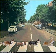 Google Image Result for http://ihasahotdog.files.wordpress.com/2011/10/funny-dog-pictures-abbey-road-corgi-style.jpg