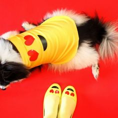 Easy DIY matching ladies and dog emoji costumes for Halloween!