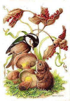 Risultati immagini per Racey Helps Autumn Illustration, Children's Book Illustration, Beatrix Potter, Woodland Creatures, Woodland Animals, Animal Drawings, Art Drawings, Animals Beautiful, Cute Animals