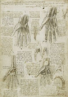 Leonardo Da Vinci, hand sketches. This piece is especially intriguing to me as I too want to focus on hands for my final piece. This image shows his drawing of the various layers of the skin tissue - bones, muscles, tendons - and thus links well with my theme of skin layers. I would like to bring in elements from his sketches into my own work, especially the amount of detail he puts in, to illustrate various layers of the body.