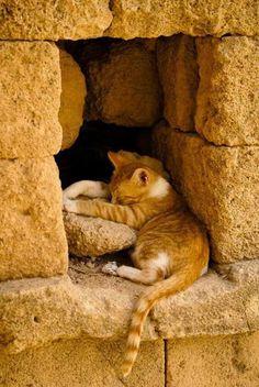 Cute! - Francesco P. - Google+