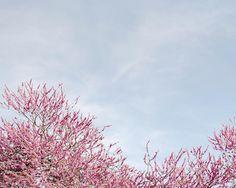 """""""Mi piace"""": 2,741, commenti: 27 - Olivia Thébaut (@oliviathebaut) su Instagram: """"Parisian blue skies"""""""