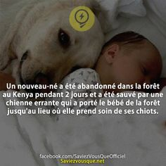 Things To Know, How To Know, Did You Know, Happy Stories, Quote Citation, Real Facts, Love Pet, Learn French, Helping Others