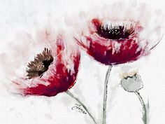 Poppies. The flower of remembrance.