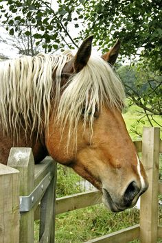 Horse Photography - title 'Watching' - by Ian Hainsworth