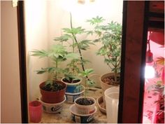 how to grow weed in apartment youtube