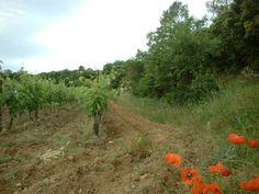 Au bord des vignes, Le Clos D´Isidore.
