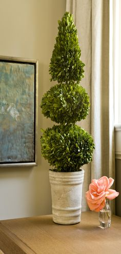 Napa Home & Garden Preserved Boxwoods Preserved Greens Double Ball and Cone